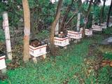 飼養蜜蜂的蜂箱